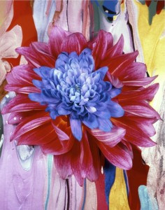 beane-multicolormum-2jpg